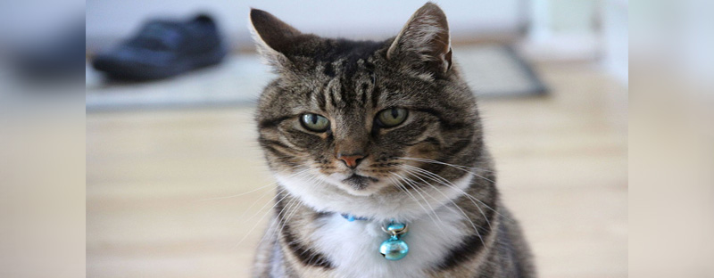 Do cats like collars with bells?